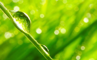 How green cleaning is the perfect money saving option this spring